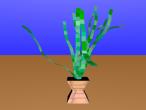 A pot of plant